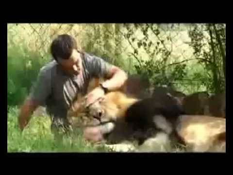 The Lion Whisperer - Kevin Richardson and his Lions - South Africa - Amazing bond with Animals