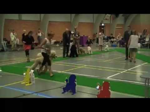 Poodleclub show in Lund, DK 12th August 2012 - Best in Show
