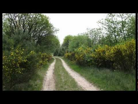 Country Roads  (James Last).wmv